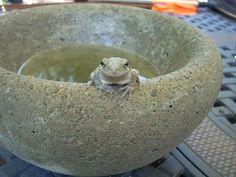 Gardening 4 Life - Easy to make concrete bowls