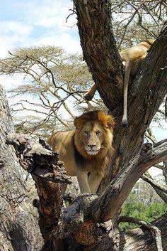 Solio Game Park . Kenya