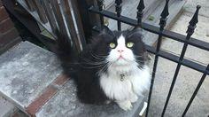 Tranquilli: c'è Minkus a proteggere il quartiere. Da anni, ogni giorno questo gatto si mette sul suo trespolo e tiene tutto sotto controllo. La sua presenza è diventata un punto di riferimento per tu