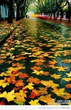 Rainy Autumn Leaves