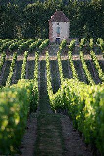 Vignoble de Cahors | par LOT Tourisme