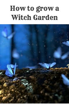 The plants and secrets of a Witch Garden