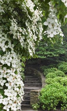 Dogwood overhanging a garden path and steps (Hollander Landscape Architect) Moon Garden, Dream Garden, Lush Garden, Shade Garden, Garden Paths, Garden Landscaping, Landscaping Ideas, Beautiful Gardens, Beautiful Flowers