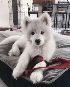 60 Funny Furry Animals To Brighten Your Day - chien ( ) and pets puppies Cute Baby Animals, Animals And Pets, Funny Animals, Funny Dogs, Funny Puppies, Silly Dogs, Cute Dogs And Puppies, I Love Dogs, Doggies