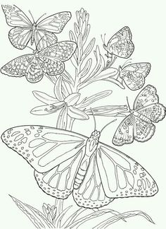 Adult Coloring | Cluster If Butterflies.
