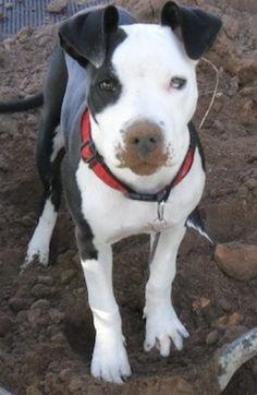 My dog Sassy. Kathleen, Bisbee, AR. 11/28/13.