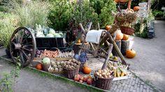 Picnic, Stuffed Mushrooms, Vegetables, Outdoor, Food, Stuff Mushrooms, Outdoors, Essen, Picnics