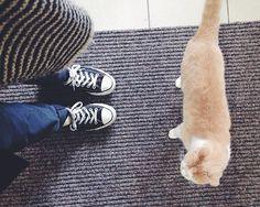 🐈 #amsterdam #instamsterdam #cats #catstagram #catsofinstagram #poezenboot…