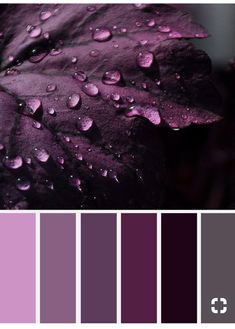 6 nuances de violet - color inspiration - Grey and shades of purple color inspiration , Grey and purple color inspiration ,purple and grey color schemes ,color palettes