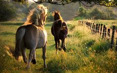fence line jaunt by equine