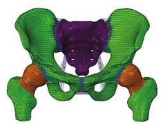 3 dimensional model pelvis paper - Google Search