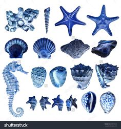 composition of most common seashells and mollusk over white background