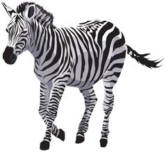"""""""Somewhere, the zebra is dancing.""""  ― Garth Stein,"""