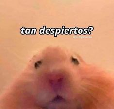 Funny Spanish Memes, Spanish Humor, Funny Reaction Pictures, Funny Pictures, Funny Cartoon Quotes, Cute Emoji Wallpaper, Inspirational Phrases, Funny Wallpapers, Instagram Quotes