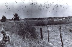 Operation Market Garden, 17 September, 1944. The bazookaman at left wears a 2/501st helmet stencil, and presumably, the serial floating to earth in the distance is 3/501 arriving.