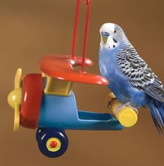 I'm not sure this link works but I sure want an airplane for my aviary!!!