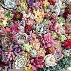 Doesn't get much better than this #leafandclay #succulents cc: @limpopo_v_v_ http://www.leafandclay.co Like and Repin. Thx Noelito Flow. http://www.instagram.com/noelitoflow