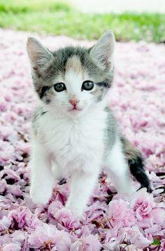 Flower Girl by Leah Fauller on Flickr -- For kitty lover gift ideas on kittylovergifts.com: Beautiful Kitty, Kitty Cats, Beautiful Cats, Adorable Kittens, Animals Cats, Cats Kittens, Beautiful Baby, Cute Kittens, Baby Cat