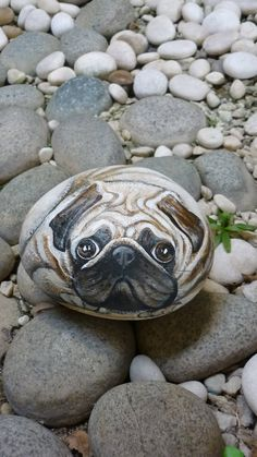 "Pug was once claimed as a Dutch dog ! The name is thought to come from the Latin "" pugnus "", meaning ""closed fist "",which is what the Pug. Pebble Painting, Pebble Art, Stone Painting, Diy Painting, Rock Painting, Painted Rock Animals, Hand Painted Rocks, Painted Pebbles, Painted Stones"