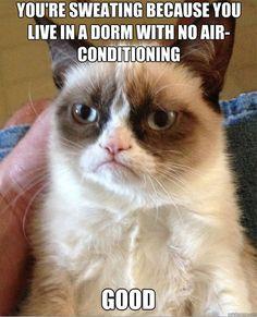 Grumpy Cat. Dorm with no air conditioning. Good.