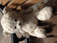 Found on 19 Aug. 2015 @ B90 3AL. White teddy bear found in Shirley Park Visit: https://whiteboomerang.com/lostteddy/msg/p0voio (Posted by Karen on 19 Aug. 2015)