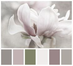 """Magnolia Print. Soft natural palette. """"Moody"""" from kelly*n photography"""