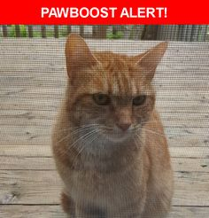 Is this your lost pet? Found in Ottawa, ON K1K 2Z2. Please spread the word so we can find the owner!  Friendly orange cat (young) - brought to Humane Society  - has chip but no information on it  Hemlock - St. Laurent