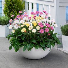 Những loại cây cảnh bạn có thể trồng trong nhà  Bạn đang dự định dùng cây xanh trang trí cho không gian sống của mình? Một ý tưởng tuyệt vời vì chúng góp phần thanh lọc không khí và làm đẹp ngôi nhà...  http://minhkiet.com.vn/nhung-loai-cay-canh-ban-co-the-trong-trong-nha-20150119022918785.html
