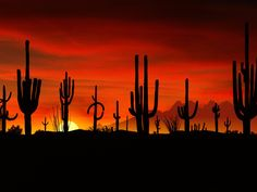 This is the Saguaros at the Sonoran Desert in Arizona. Can't WAIT to take some of these photos in Arizona :) Beautiful Sunset, Beautiful World, Beautiful Places, Amazing Sunsets, Beautiful Scenery, Desert Sunset, Sonora Desert, Tucson Sunset, Arizona Sunrise