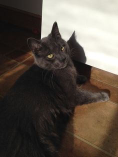 Sid vicious Cat | Pawshake