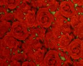 Cotton Fabric, Quilt Fabric, Home Decor,Bed of Roses, Wilmington prints, 99126-337,Red, Fast Shipping, F150