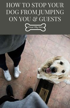 How To Stop Your Dog From Jumping On You & Guests Check out our dog training tips at http://bestdogcratesandbeds.com!