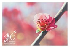 Spring is in the air. http://jowilliamsphotography.blogspot.com/