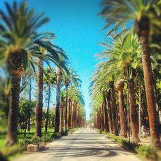 Le #palme di San Benedetto del Tronto