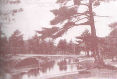 Postcard of Point Pleasant Park Anne Of The Island, Park, Abstract, Artwork, Outdoor, Summary, Outdoors, Work Of Art, Auguste Rodin Artwork