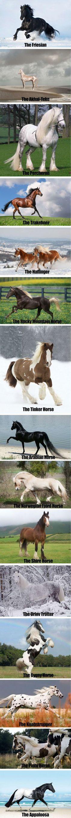 Breathtakingly Beautiful Horses - 9GAG<< Love these breeds! I have an Arabian