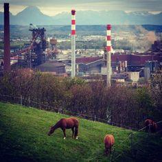 #horse #voestalpine #linz #lnz #linzpictures #voest #skyline #upperaustria #pferde #horses #riding #igerslinz #nature #outdoors #noselfie #stahlwerk #pferdeliebe #reiten #goodmorning #steyregg