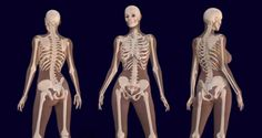 Scientist Reveal What Cannabis Does to Your Bones…