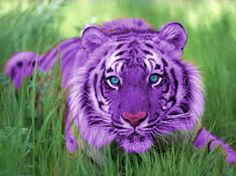 Tiger is fastest animal on earth. Tiger has ability to catch his prey very fast. Tiger legs help him to run him fast. Bengalischer Tiger, Tiger Face, Bengal Tiger, Tiger Eyes, Javan Tiger, Tiger Images, Tiger Pictures, Free Pictures, Amazing Pictures