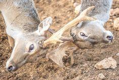 "Photo by @chen1mm  תנ""כי  #igers #igersisrael #igersoftheday #animal #zoo #nationalgeographic #nature #baby #cub  #photography #viewbug #instagram_israel #insta_israel  #natgeo #all_Israel #israeli_moments #ig_israel #bbcearth #nikon #birds #natgeowild #wings #wildlifeonearth #jerusalem #telaviv  #ירושלים"