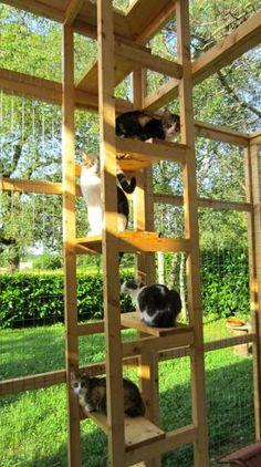 1000 id es sur le th me enclos pour chat sur pinterest for Maison exterieur pour chat