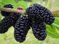 A daganatos megbetegedések megelőzésében, a cukorbetegség és a magas vérnyomás enyhítésében is használják! Ki tudja mi ez a gyümölcs?
