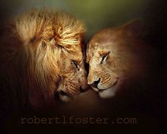 389 Best Lions Images Animals Beautiful Big Cats Wild Animals