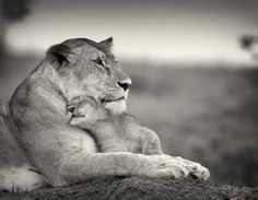 a mothers unconditional love for a child - Bing Images