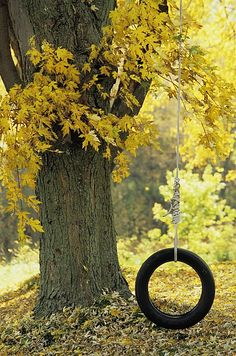 Tree With Tire Swing, Quebec City