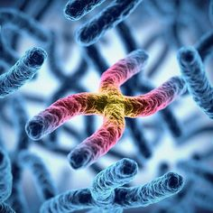 Find out what telomeres are and how they can help you live longer.