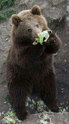 Eat Your Greens Up Son!