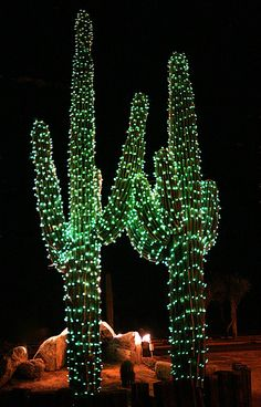 USA-Arizona Saguaro cactus at Christmas