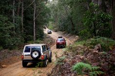 4 wheel driving in Olney State Forest, Watagans Mountains, NSW, Australia. Photo: Andrea Buschner for Forests NSW.