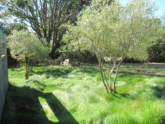 Aptos Residence - mediterranean -  - san francisco - by Kathleen Shaeffer Design, Exterior Spaces -festuca rubra grass
